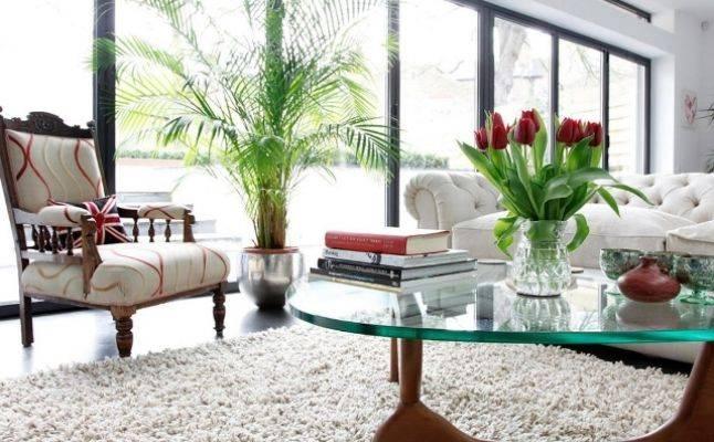 نصائح قيمة حول تزيين المنزل بالنباتات