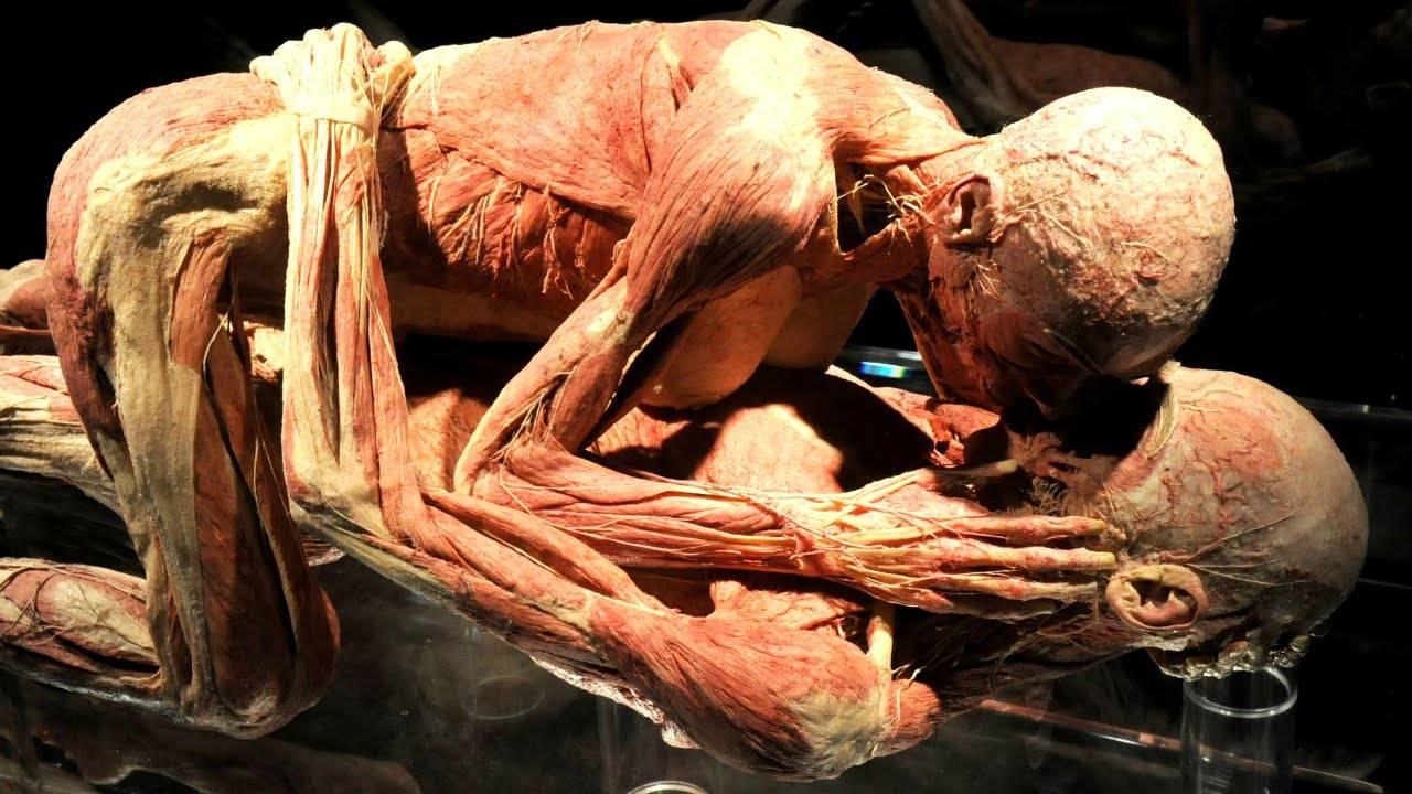 99 حقيقة مذهلة لم تكن تعلمها عن الجسم البشري صبايا ستايل